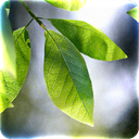 Apps Like Fresh Leaves & Comparison with Popular Alternatives For Today